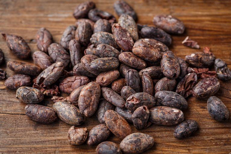Découverte du Chocolat ou Cacao