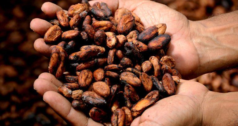 Cacao… BOIRE ou MANGER ? (Les deux !)