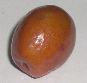 jujube de même forme que le natsume matcha
