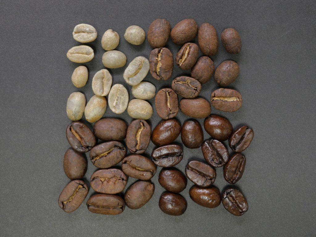 grains de café verts et torréfiés à différents degrés.