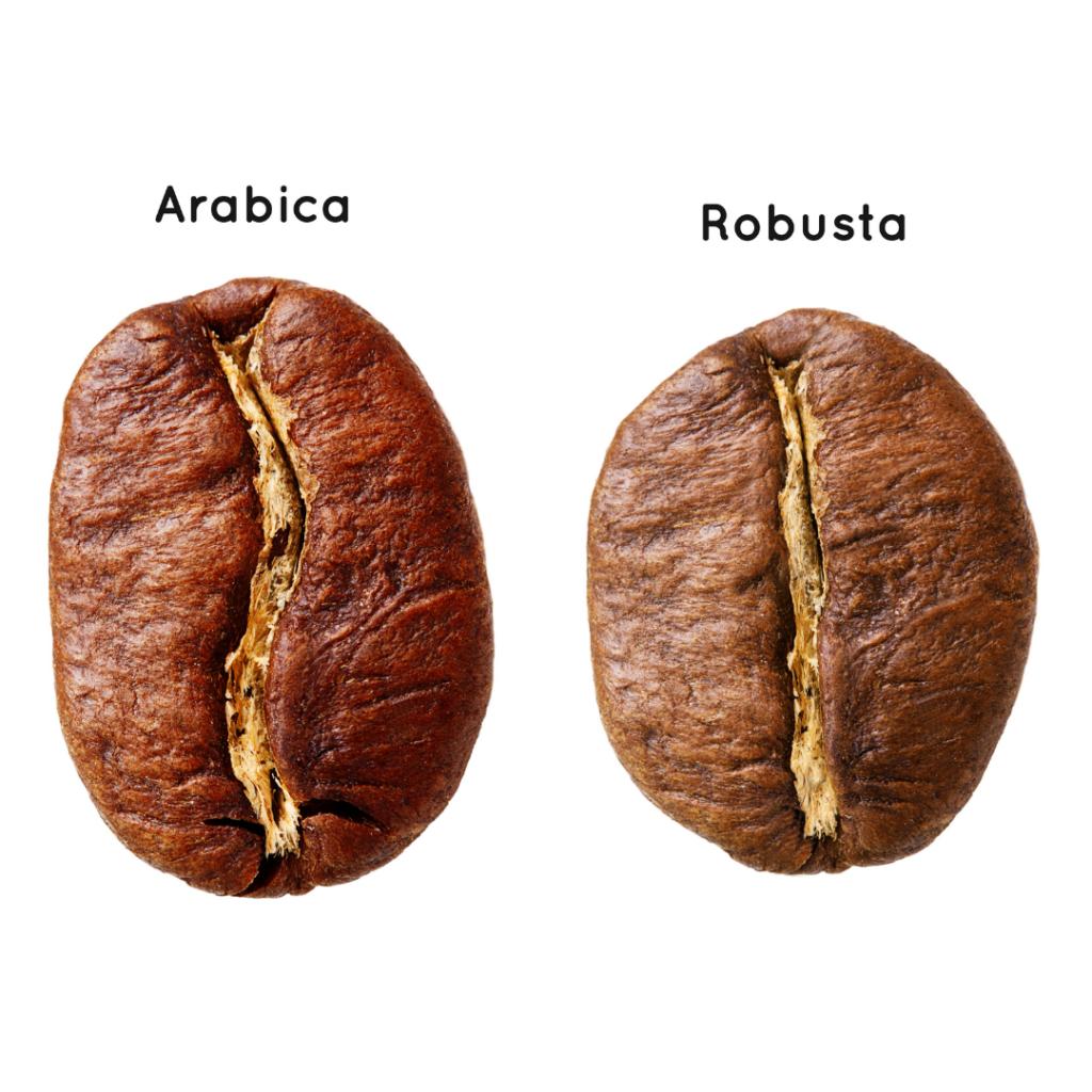 grains de café : arabica ou robusta ?